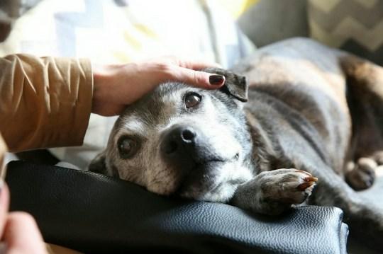 Rescue dog Lita