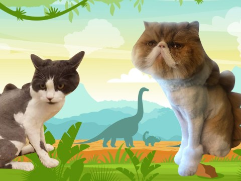 Cats are being given buzz cuts to look like little dinosaurs and don't they look fierce?