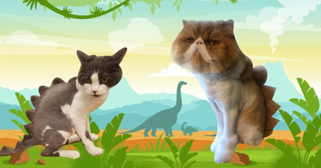 Dinosaur cats