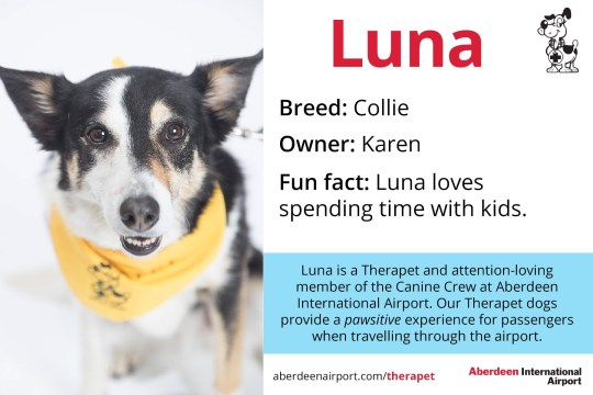 Luna - Collie Therapet dogs programme - the Canine Crew Who are the Canine Crew? Our team of four legged volunteers delight passengers with a friendly wag or furry cuddle. All of our therapy dogs are registered Therapets, part of Canine Concern Scotland Trust. Known to reduce anxiety, therapy dogs can bring smiles and brighten your day. The Canine Crew and their accompanying handlers roam the terminal every week to help you feel welcomed and relaxed. The dogs in bandanas and handlers in blue vests are an excellent addition to the customer service team. Passengers love seeing warm, wet noses and wagging tails that help create a friendly, PAWSitive experience at ABZ! Meet our Canine Crew and see when they are on shift. See one of our Canine Crew in the terminal? Make sure you share your pictures on social media using the hashtag #caninecrewabz, and we'll share the best ones! Meet the Aberdeen Airport Canine Crew Our Therapet Dogs are here to make your airport experience more enjoyable