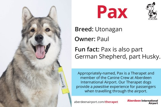 Pax - Utonagan Therapet dogs programme - the Canine Crew Who are the Canine Crew? Our team of four legged volunteers delight passengers with a friendly wag or furry cuddle. All of our therapy dogs are registered Therapets, part of Canine Concern Scotland Trust. Known to reduce anxiety, therapy dogs can bring smiles and brighten your day. The Canine Crew and their accompanying handlers roam the terminal every week to help you feel welcomed and relaxed. The dogs in bandanas and handlers in blue vests are an excellent addition to the customer service team. Passengers love seeing warm, wet noses and wagging tails that help create a friendly, PAWSitive experience at ABZ! Meet our Canine Crew and see when they are on shift. See one of our Canine Crew in the terminal? Make sure you share your pictures on social media using the hashtag #caninecrewabz, and we'll share the best ones! Meet the Aberdeen Airport Canine Crew Our Therapet Dogs are here to make your airport experience more enjoyable