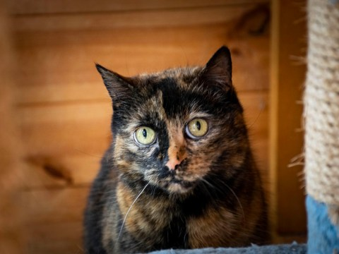 Unlucky cat Sophie is looking for a forever home