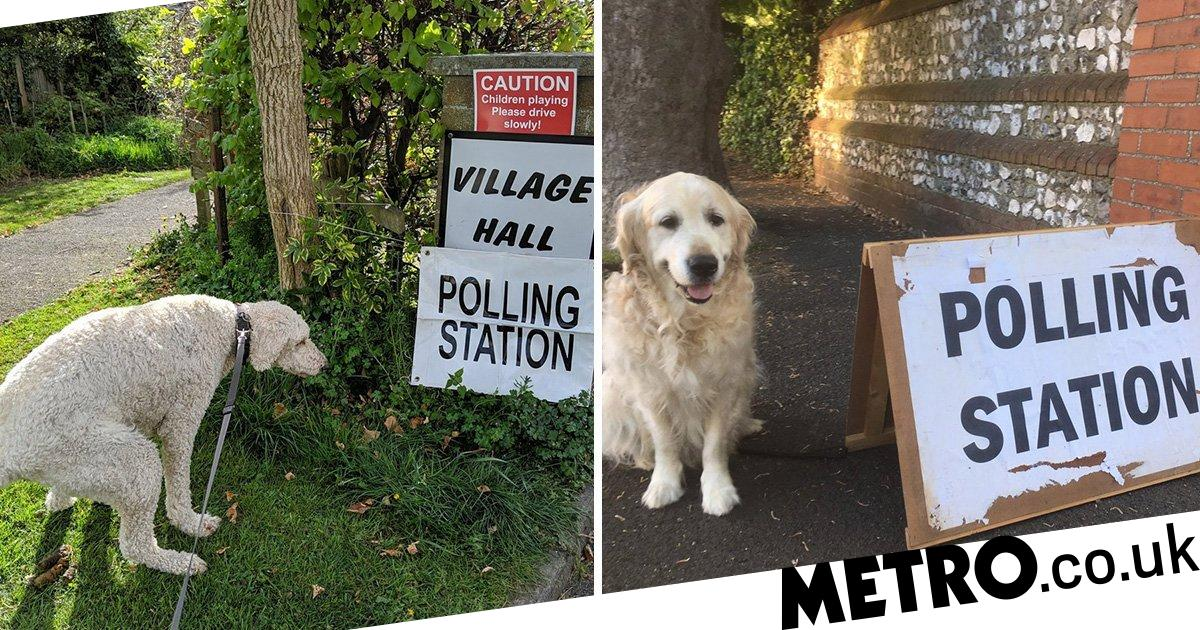 Some dogs clearly don't like being made to wait at polling stations