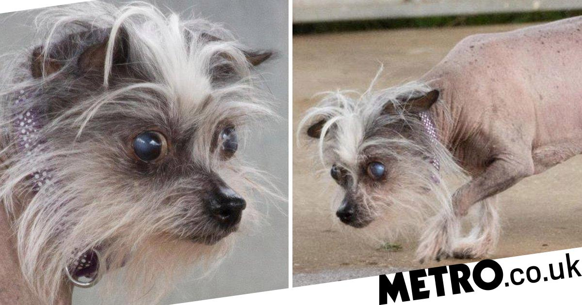 People won't adopt this dog because she's too 'ugly' - can you give her a home?