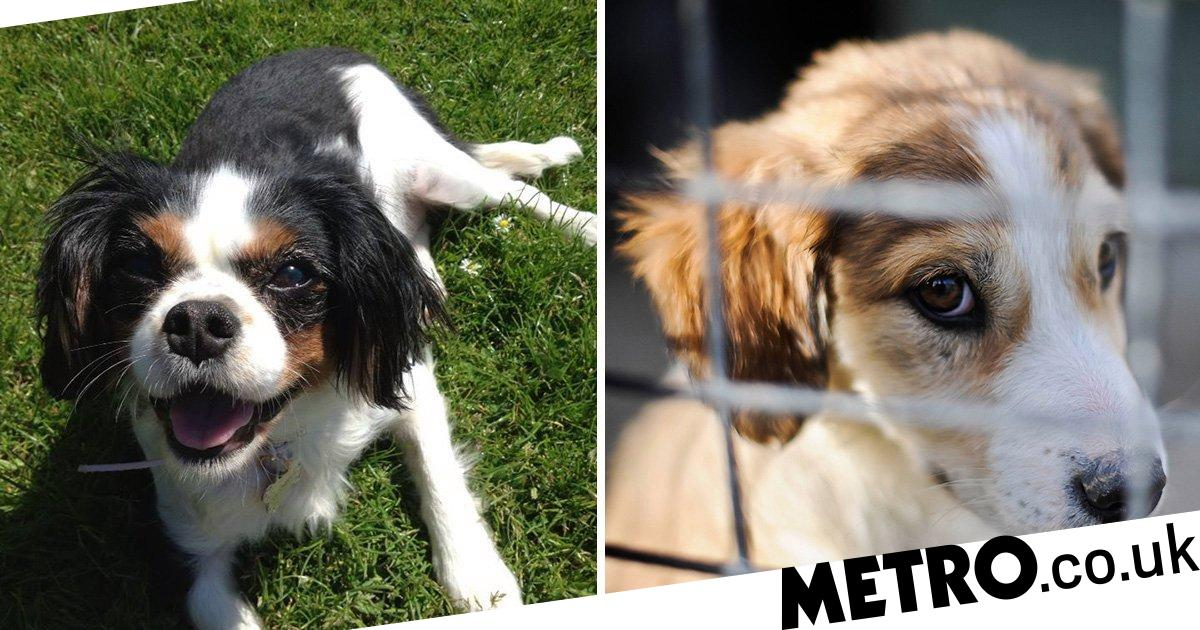 New 'Lucy's law' will protect dogs and cats in crackdown on puppy farms