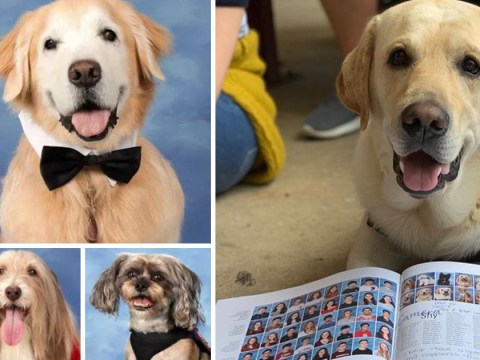 Parkland shooting survivors make therapy dogs a year book to say thank you