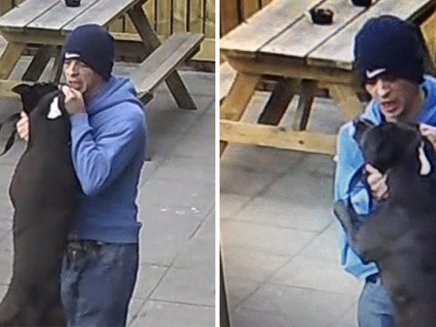 Thug rams dog into pub fence then punches it repeatedly