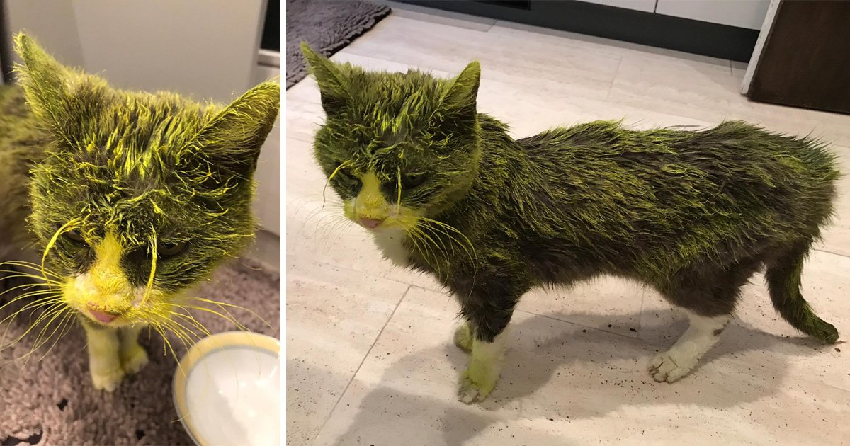Elderly cat dies after being sprayed in face with waterproof yellow paint