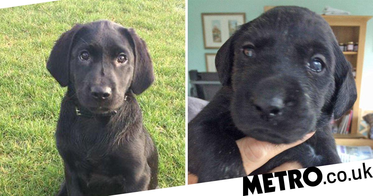 Labrador puppy beaten to death with slipper for defecating inside house