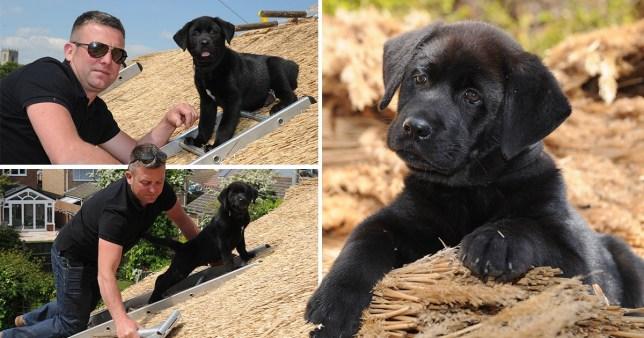 Richard Haughton with his nine week old puppy Shuck helping re-roof a house in Norfolk