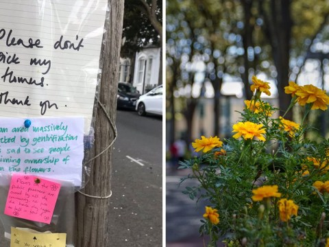 Post-it note war over flowers deemed 'most middle-class argument ever'