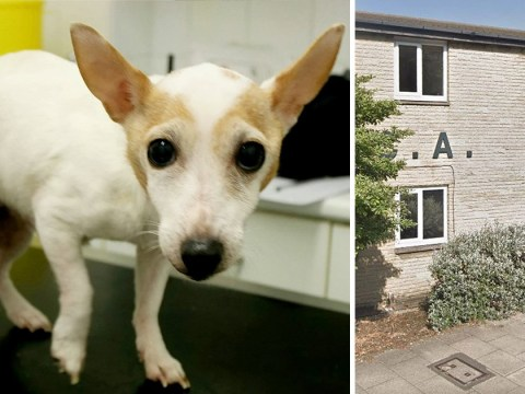 RSPCA appeals for the owners of elderly dog thrown out of window to come forward