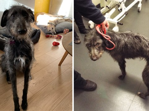 Dog starved to death after being left in filth without food or water