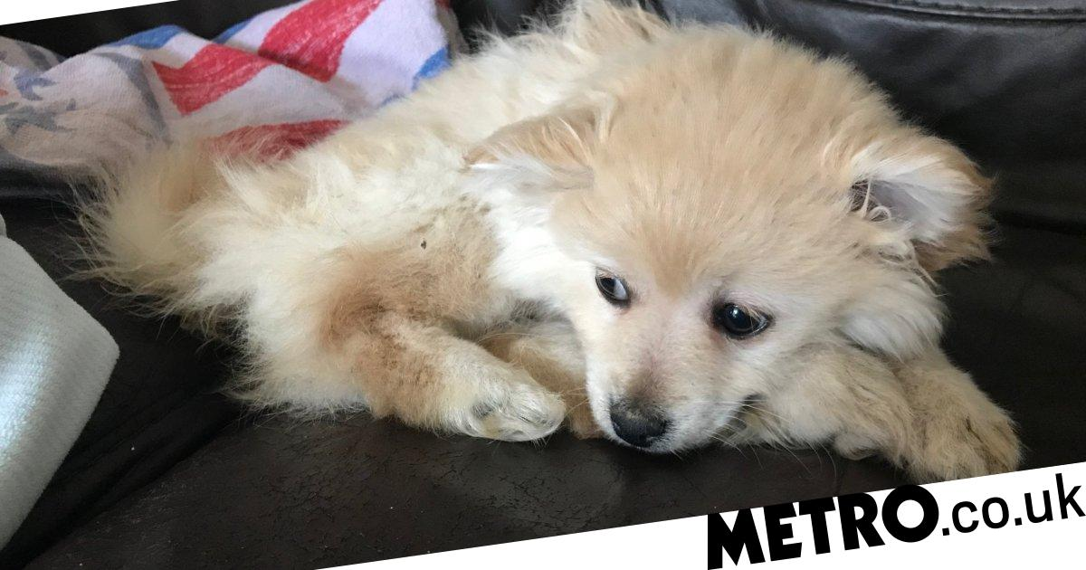 Nine-week-old puppy buried alive in 'hideous act of cruelty'