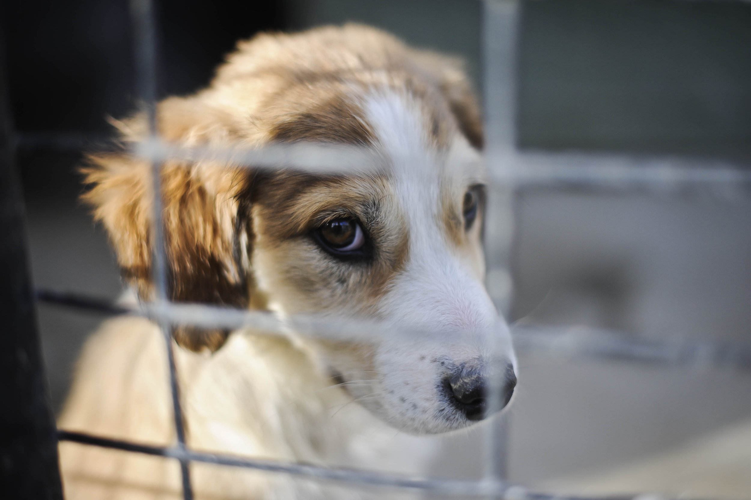 Undated file photo of a puppy. Pet shops are to be banned from selling kittens and puppies by the Government in a crackdown aimed at stopping puppy farming.