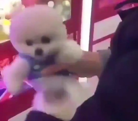 Real dog grabber Claw machine that grabs live PUPPIES in China