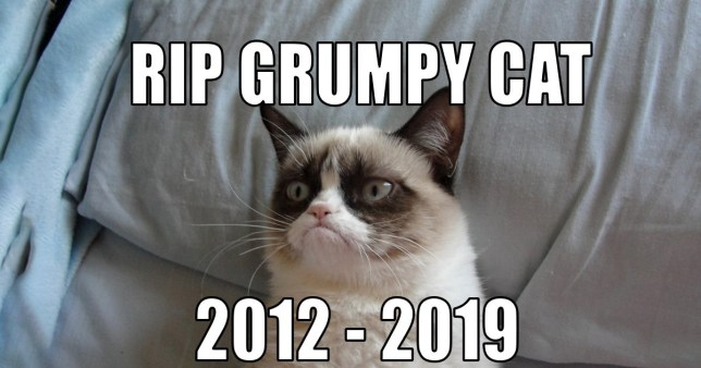 Grumpy Cat dies at the age of seven after falling ill ...