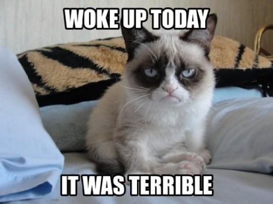 Grumpy Cat says