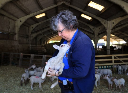 Farmer can't let families onto land to see lambs 'because of