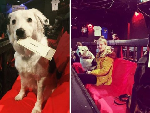 US cinema allows dogs and has bottomless wine and whiskey