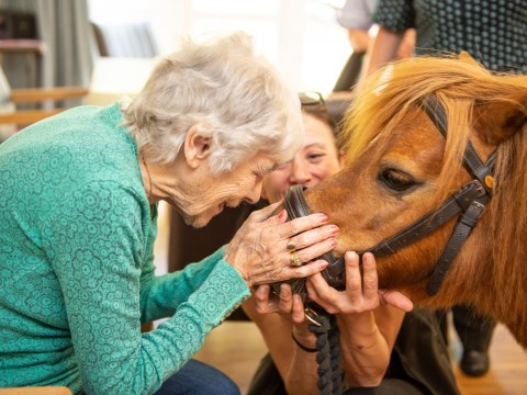 Elderly people made up as miniature ponies visit their care home