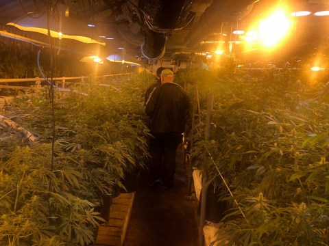 Cannabis farm worth £6,000,000 discovered after delivery of compost