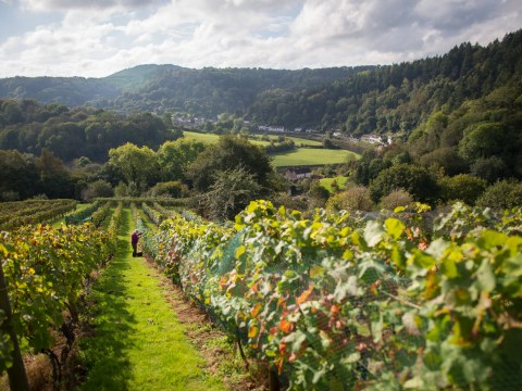 British wine industry is one of the fastest growing in the world