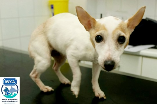 The RSPCA is appealing to find the dog's owners