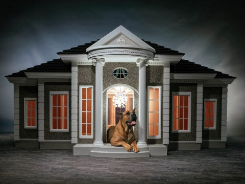 You can now buy your dog a luxury home with in-house treat dispensers