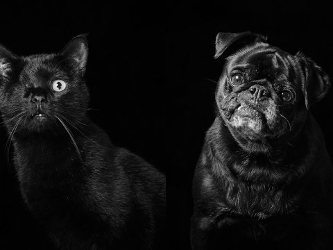 Photographer takes stunning portraits of black cats and dogs to get more of them adopted
