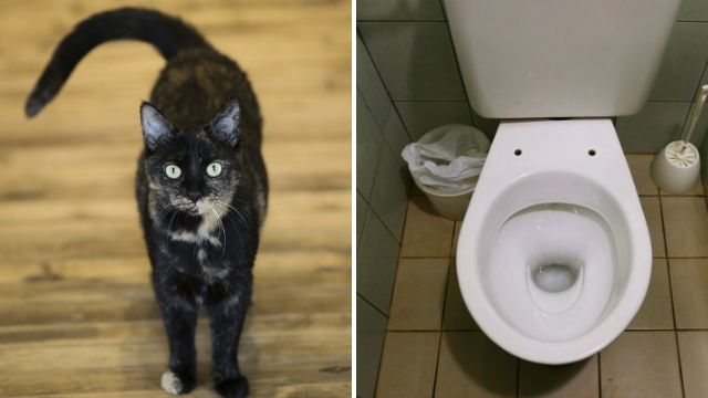 'Greedy water company tried to blame cat flushing toilet for customer's soaring bills'