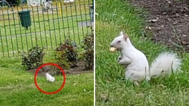 Super rare white albino squirrel spotted in London park