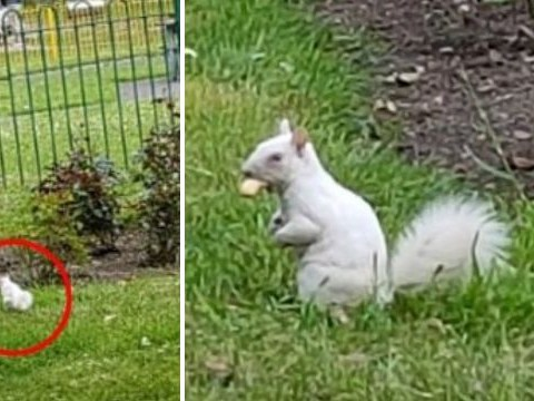Super rare white albino squirrel spotted in London park