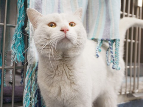 Cat found trapped under couple's floorboards is looking for a loving home