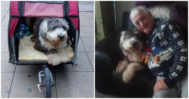 Dog warden fines pensioner taking pet for final walk before he's put down