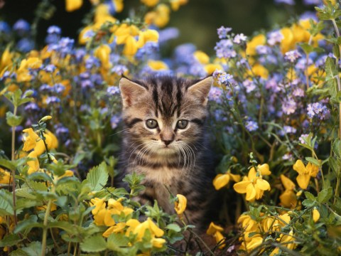 Hacks to keep your cat safe from harmful plants in the garden