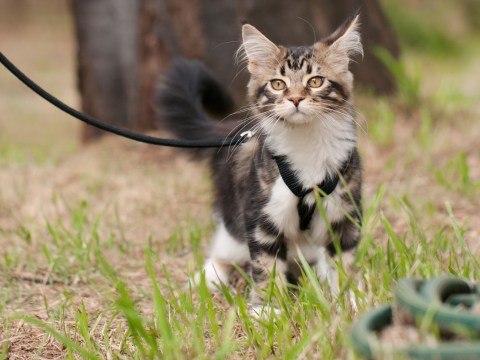 How to take your cat for a walk