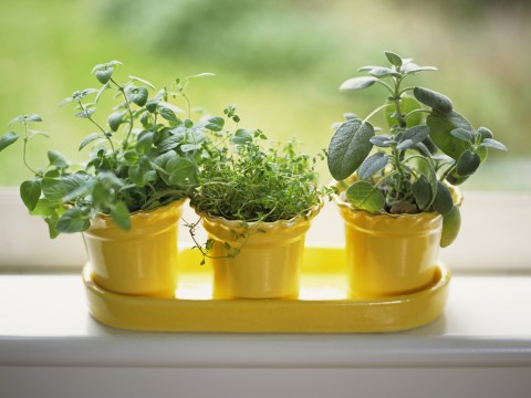 How to keep supermarket herb pots alive and help them thrive