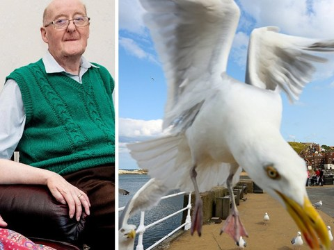 Elderly couple held hostage by seagulls in their own home for six days