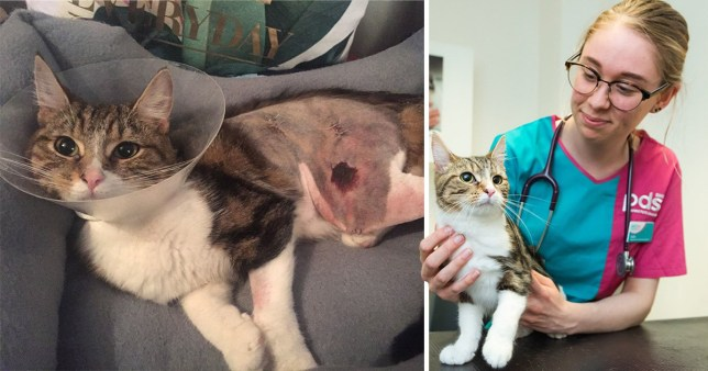 Chi the cat survived 40 mile journey next to car engine