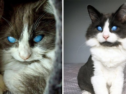 Louie the blind cat was rescued by chance – and now he's an Instagram star