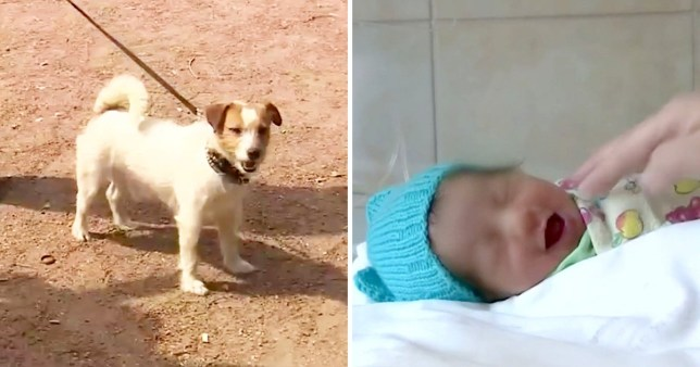 The dog managed to locate the baby