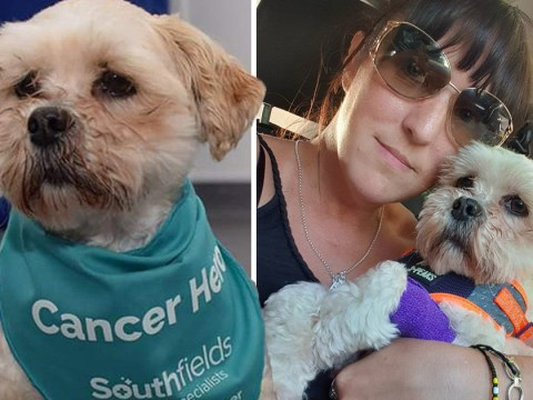 Desperate dog owner needs £16,000 to save pet's life