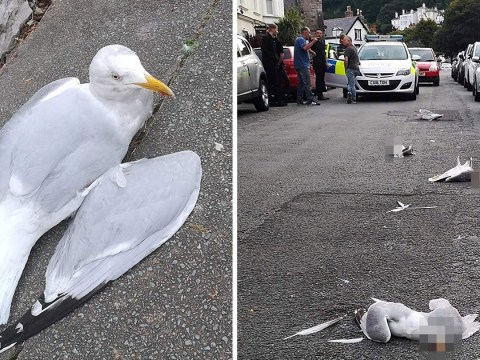 Seagulls 'deliberately' killed as driver 'ploughs car into birds'