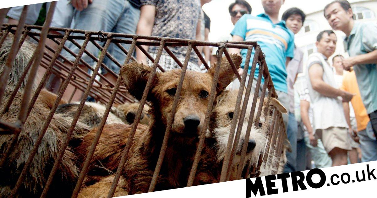 Pets snatched and sold as dog meat at 'unspeakably cruel' Yulin Festival