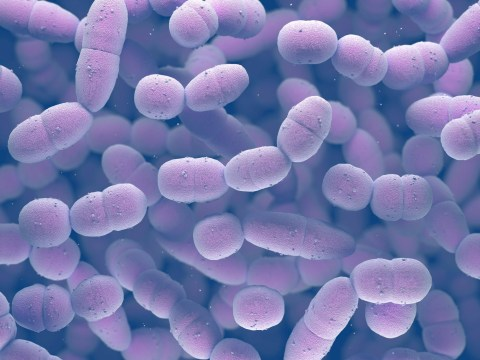 What is Strep A infection, how does it spread and what to do if you think you have symptoms