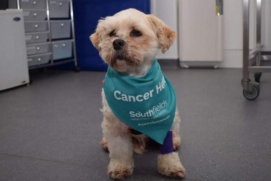 Barney would be treated at Southfields Veterinary Hospital