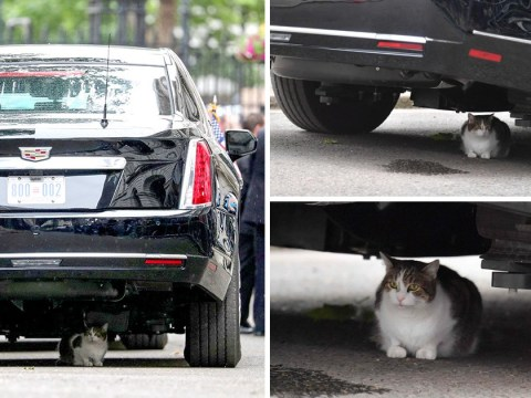 Larry the Cat gets in the way during Donald Trump's visit to Downing Street