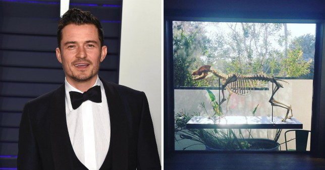 Orlando Bloom says 'goodnight' to his dead dog's skeleton which sits in his home