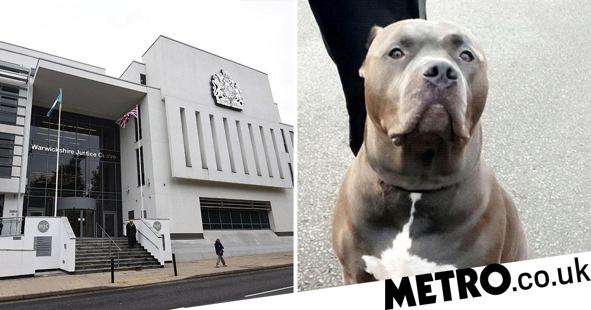 Thief who stole dog and tried to cut its ears off still allowed to own animals